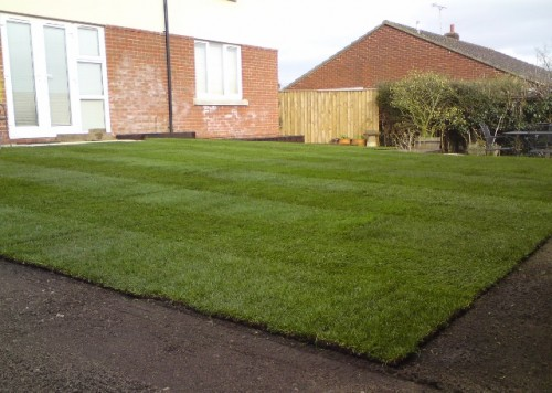 home lawn turf for sale