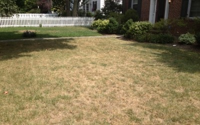 When is it time to consider a new lawn?