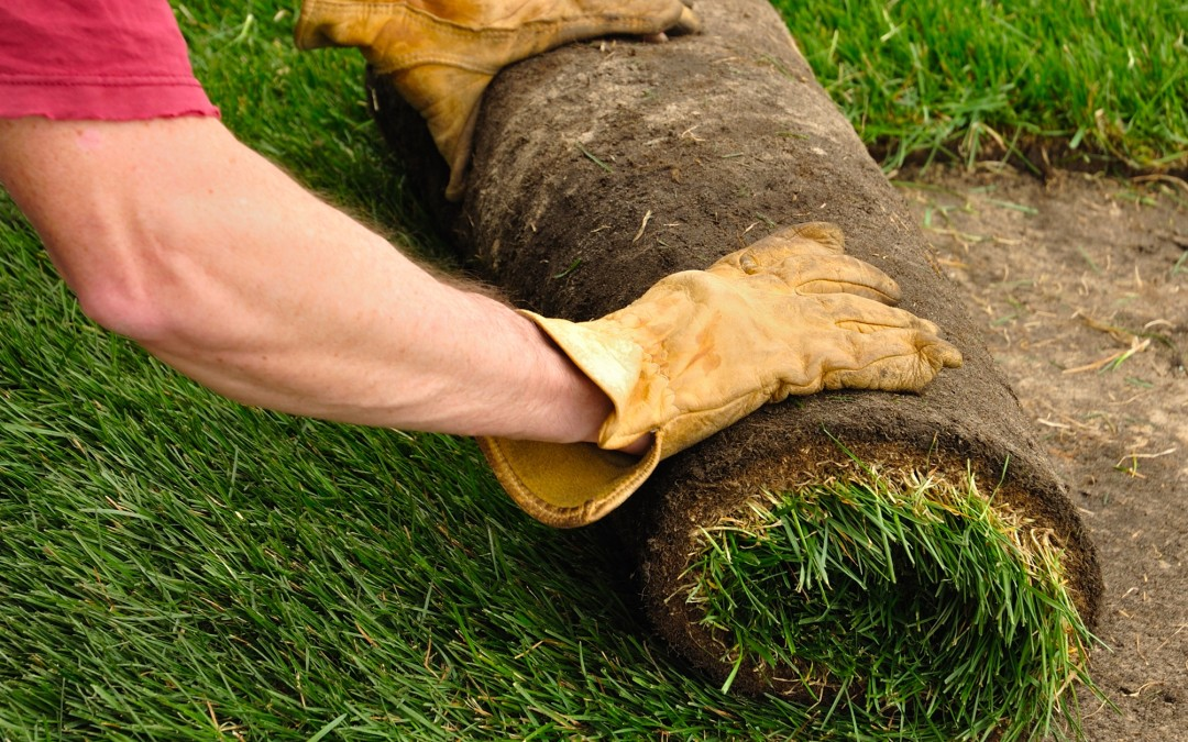 How to choose the correct type of turf for a lawn