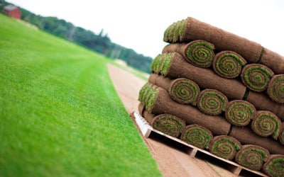 How to repair your lawn with turf