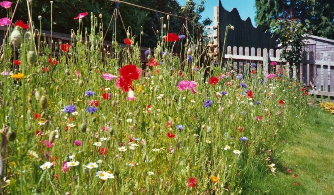 Wildflower turf – How to create a wildflower area